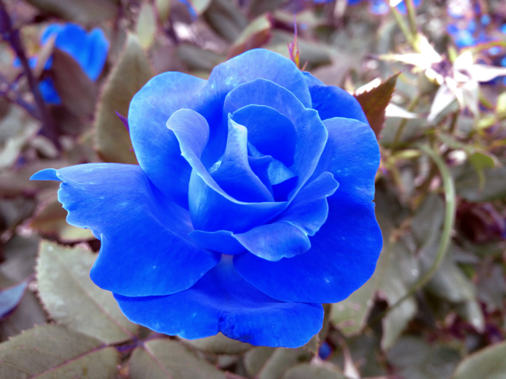 Cool hd wood wallpaper download free wallpapers and desktop - Eletragesi Blue Rose I Love You Images